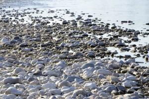Le grave del fiume Piave | GOBelluno Notizie
