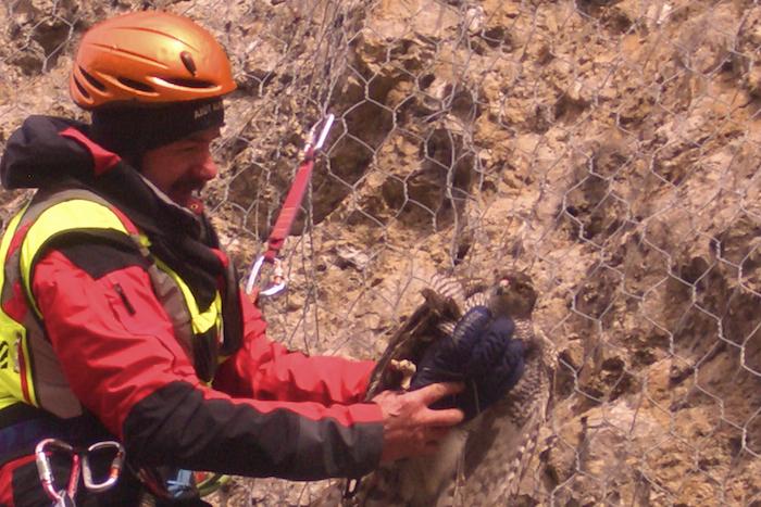 Il Soccorso Alpino in aiuto ad un falco