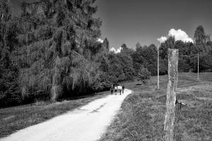 Immagine archivio (Luca Mares)
