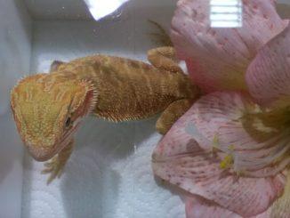 Reptiles Day mostra Longarone Fiere